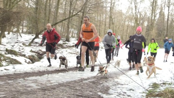 Dog runners take part in Winter race