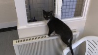 Helping cats find new homes in Sheffield